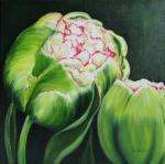 Tulpen in knop